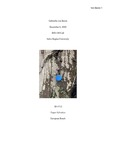 Fagus sylvatica (European Beech), ID #712