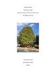 Chamaecyparis obtusa (False Cypress-Hinoki), ID #982