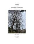 Tilia cordata (Littleleaf Linden) #1059