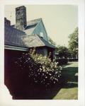 Bush outside of Stonor/Drexel Hall