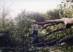 Man working with a tree