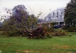 Fallen tree at Founder's Hall