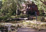 Fallen trees outside of the Gatehouse