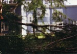 Moore Hall grounds with a fallen tree