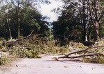 Fallen trees covering Ochre Point Avenue