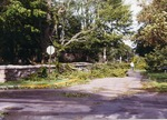 Tree branches covering Victoria Ave