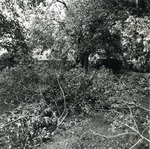 Campus Grounds covered with tree branches