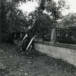 Falling tree ontop of a fence