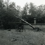 Falling tree on top of the Ochre Court fence