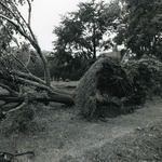 Watts-Sherman grounds after Hurricane Bob