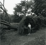 Student standing under a fallen tree outside of William Watts Sherman